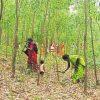 India_cuttingwood_web